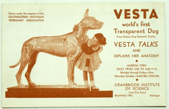 Vesta, the transparent dog