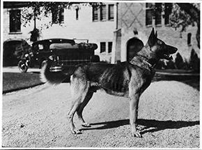 Buddy 1929