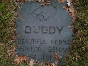 Buddy_blog