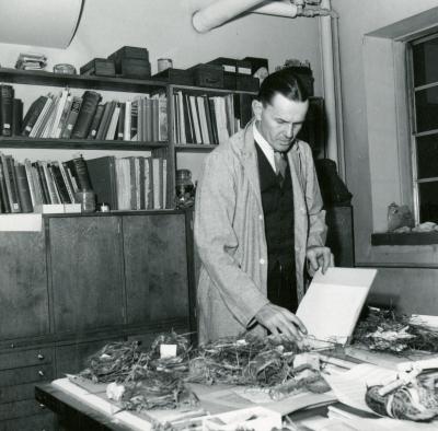 Bird Nest Studies, 1951