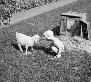 Brookside School pet show, 1936.