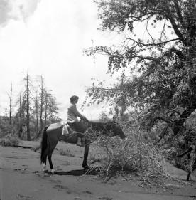 Marcelle R. Hatt on horseback in Mexico, ca 1947.