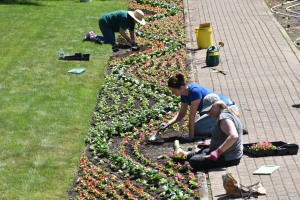 Cranbrook House and Gardens Auxiliary volunteers plant in the Sunken Garden. Photo by Eric Franchy, Cranbrook House & Gardens.