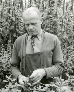 Alger Munt working in the greenhouse at Cranbrook, October 1950.